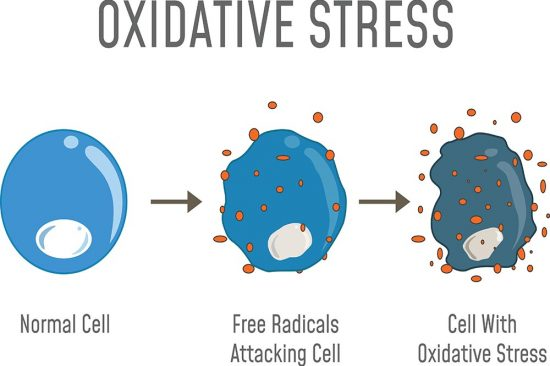 Oxidative Stress Diagram