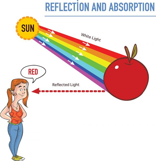 Reflection and absorption vector illustration